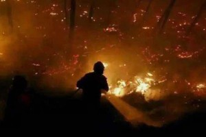 Forest fire rages in South China, casualties unknown