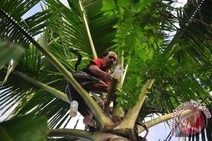 Kementan siap kembalikan kejayaan kelapa nasional
