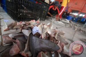 Ikan hiu masih dijual di TPI Indramayu