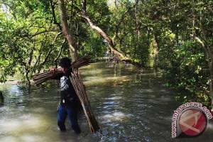 Hutan bakau Bengkulu serap 3.852 ton karbon