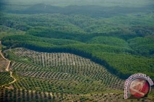 KLHK temukan indikasi pelanggaran HGU hutan Sumsel