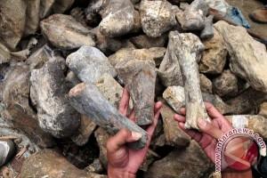 Dewan Kepurbakalaan Bojonegoro kumpulkan ribuan fosil