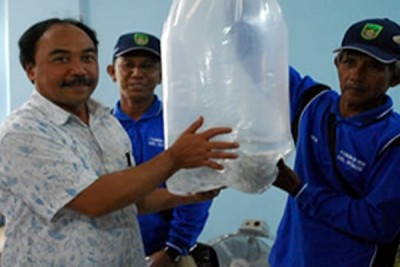 Indonesian largest producer of breeding fishes