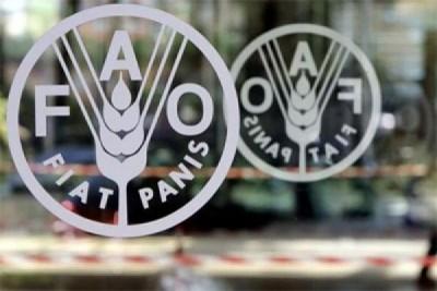 Petani Indonesia terima penghargaan dari FAO