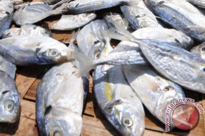 Kemenperin ingin kinerja industri pengolahan ikan ditingkatkan