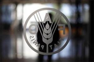 Kembangkan jagung di lahan marginal, FAO siap bersinergi dengan Kementan
