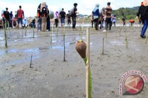 Aremania tanam bibit mangrove di Pantai Bengkung