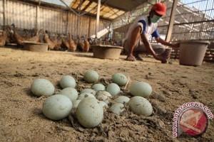 Puluhan ribu telur bebek tanpa dokumen disita polisi