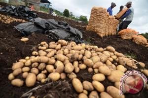Kemendag: impor kentang industri dihentikan bertahap
