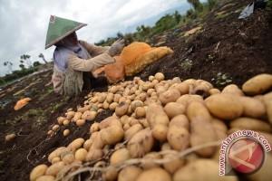 Ditengarai ada penyalahgunaan impor kentang