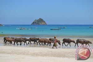 Turis Korsel ke Indonesia semakin banyak saja