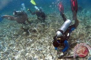 Terumbu karang terbesar Jepang rusak