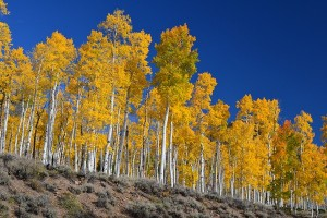 Tiga pelajaran dari pohon tertua di dunia