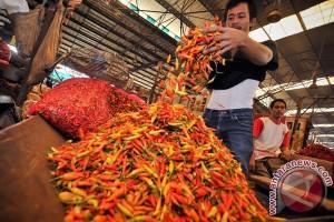 Harga cabai di Sumenep masih Rp130 ribu/kilogram
