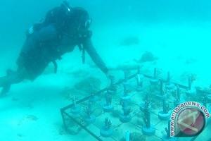 Korps Marinir TNI AL-penyelam UBH tanam terumbu karang
