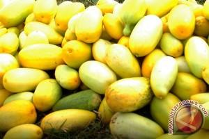 Timun suri buah khas berbuka puasa Binjai