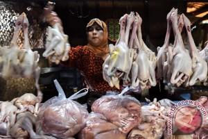 Apindo: pemerintah kelola ayam tidak rugikan pengusaha
