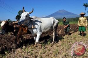 Ketua Komisi IV DPR dorong pemerintah wujudkan kedaulatan pangan