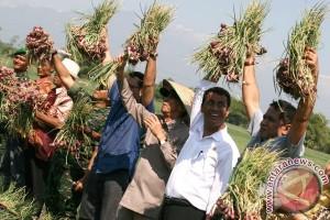 Mentan: pemerintah tidak akan impor bawang merah