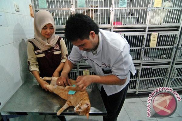 Studi: Memelihara Kucing Tak Sebabkan Gangguan Mental