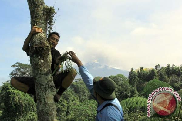 Beragam jenis anggrek di Gunung Merapi daya tarik wisata - ANTARA News