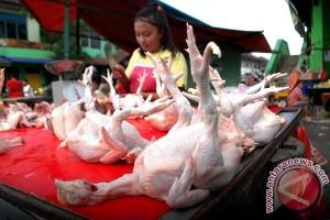 Harga ayam potong masih tinggi di Bogor