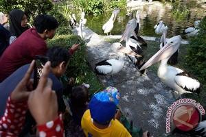 GL Zoo Yogyakarta targetkan 150.000 pengunjung selama libur Lebaran