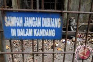 BKSDA relokasi sejumlah satwa dari Taman Remaja