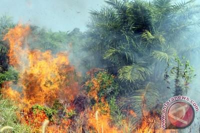 Kebakaran Lahan Perkebunan Sawit