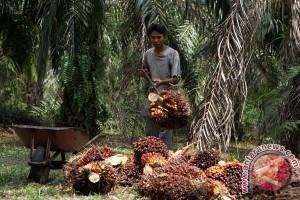 Apindo: ancaman PHK di Sumut lebih besar