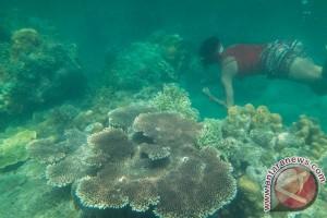 Pengiriman 257 terumbu karang kembali berhasil digagalkan