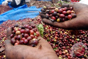 Ini cara Mentan jadikan kopi Indonesia nomor satu dunia