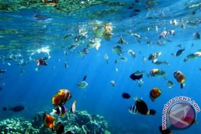 Keindahan Taman Laut Olele