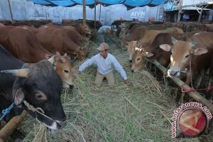 2.052 hewan kurban didatangkan ke Sampit