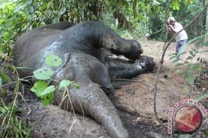 Perburuan gajah rugikan sektor pariwisata Afrika Rp326,6 miliar setahun
