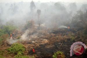Polisi periksa saksi kasus pembakaran hutan di Jambi