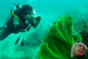 Indonesia to promote diving tourism to Japan tourists