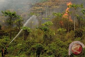 Hutan Perhutani di Temanggung terbakar