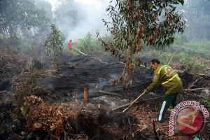 Desa Siaga Api dibentuk di Ketapang cegah Karhutla