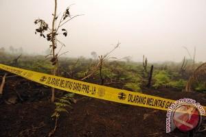 Polda Jambi periksa 15 perusahaan perkebunan