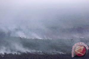 58.000 hektare hutan dan lahan Sumatera terbakar
