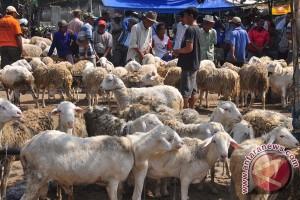 Anggota DPR: perhatikan sapi-kambing Idul Adha