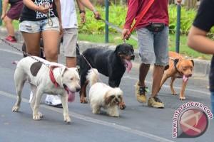Warga Jembrana protes anjingnya dieliminasi petugas