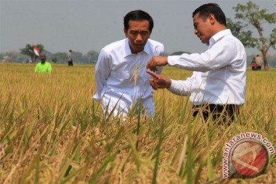 Despite El Nino, paddy harvests take place any time: President Jokowi