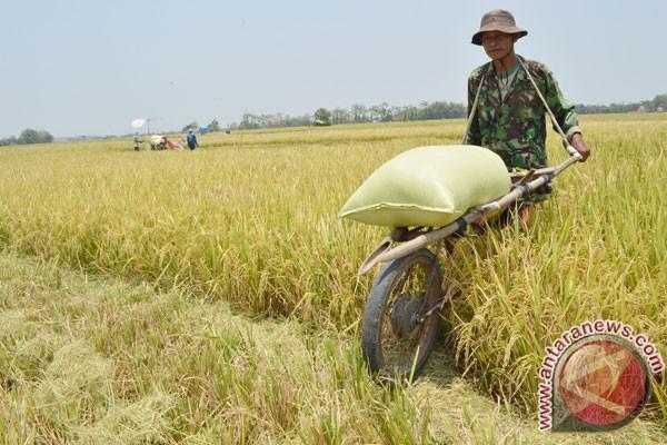 Panglima Kodam VII Wirabuana  Topi petani seragam baru TNI cf67519d9b