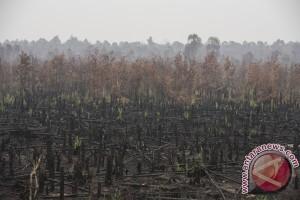 Benaca Asap - 238 kasus pembakaran hutan dan lahan diusut polisi