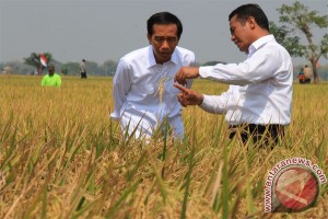 Despite El Nino, paddy harvests take place any time: President Jokowi