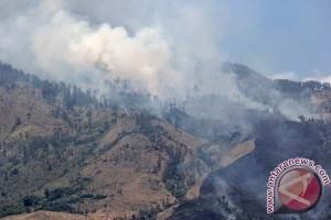 18,5 Ha hutan Taman Nasional Lore Lindu telah terbakar