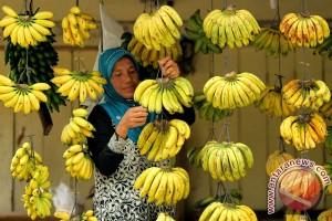 Permintaan pisang di Lebak selama Ramadhan melonjak