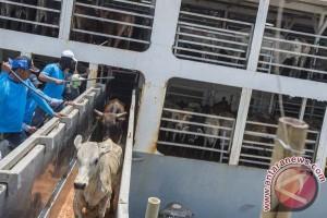 Pemerintah keluarkan izin impor 123.800 sapi bakalan